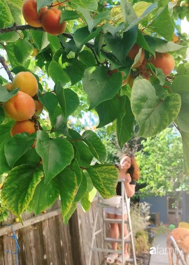 Cuộc sống bình yên, hòa mình cùng thiên nhiên khi trồng rau nuôi gà trong mảnh vườn 650m² của mẹ Việt ở Mỹ - Ảnh 15.
