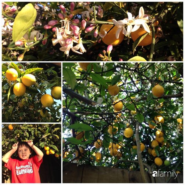 Cuộc sống bình yên, hòa mình cùng thiên nhiên khi trồng rau nuôi gà trong mảnh vườn 650m² của mẹ Việt ở Mỹ - Ảnh 30.