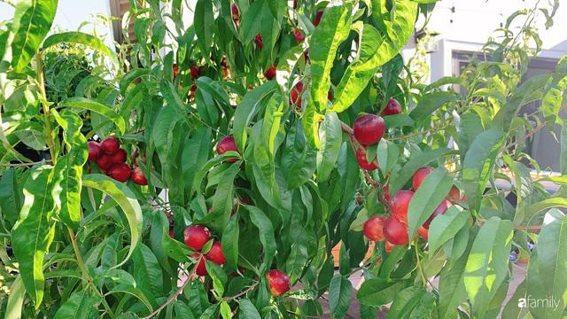 Cuộc sống bình yên, hòa mình cùng thiên nhiên khi trồng rau nuôi gà trong mảnh vườn 650m² của mẹ Việt ở Mỹ - Ảnh 8.