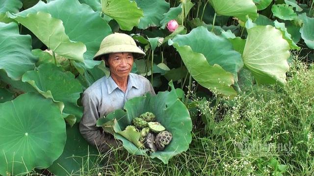 Nông dân kể chuyện: Hai tháng dầm mình dưới bùn, đút túi tiền tỷ - Ảnh 5.