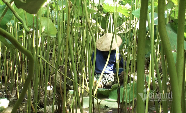 Nông dân kể chuyện: Hai tháng dầm mình dưới bùn, đút túi tiền tỷ - Ảnh 6.