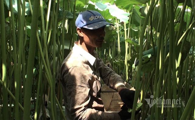 Nông dân kể chuyện: Hai tháng dầm mình dưới bùn, đút túi tiền tỷ - Ảnh 7.