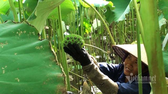 Nông dân kể chuyện: Hai tháng dầm mình dưới bùn, đút túi tiền tỷ - Ảnh 8.