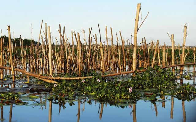 Chim hoang dã đậu kín sông Đầm - Ảnh 1.