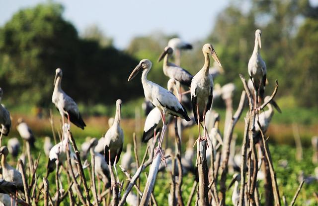 Chim hoang dã đậu kín sông Đầm - Ảnh 2.