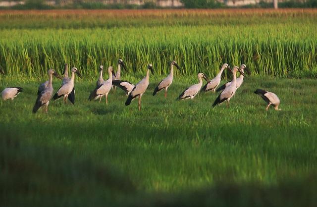 Chim hoang dã đậu kín sông Đầm - Ảnh 5.