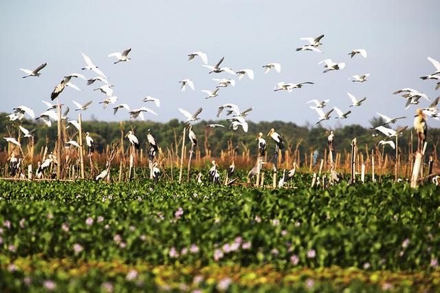 Chim hoang dã đậu kín sông Đầm - Ảnh 7.