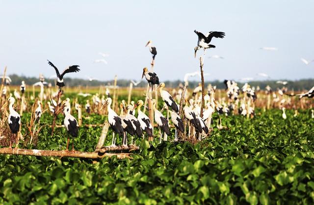 Chim hoang dã đậu kín sông Đầm - Ảnh 8.