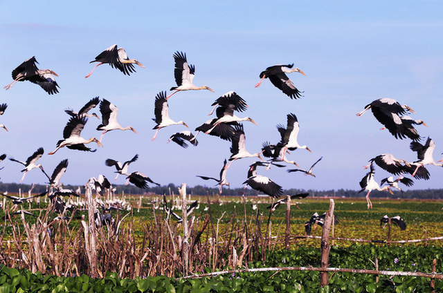Chim hoang dã đậu kín sông Đầm - Ảnh 9.