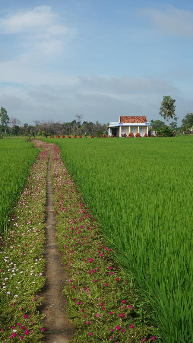 Mê mẩn con đường hoa mười giờ đẹp và lãng mạn nhất Việt Nam - Ảnh 4.