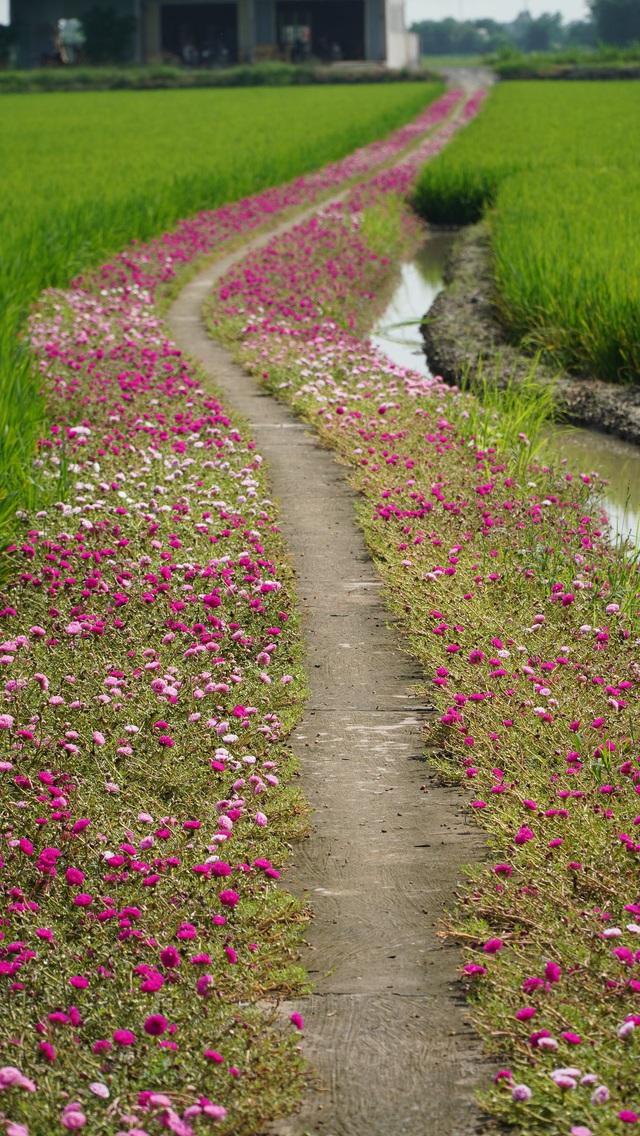 Mê mẩn con đường hoa mười giờ đẹp và lãng mạn nhất Việt Nam - Ảnh 1.