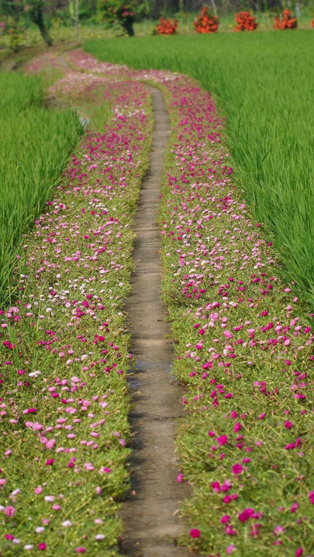 Mê mẩn con đường hoa mười giờ đẹp và lãng mạn nhất Việt Nam - Ảnh 3.