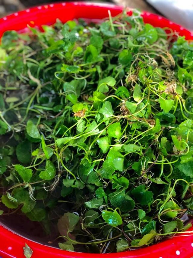 Ngạc nhiên loại rau dại mọc đầy ven đường lại chế biến được thành loạt món ăn gây thương nhớ, ăn tươi hay nấu chín đều ngon - Ảnh 2.