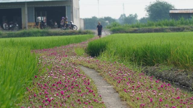 Mê mẩn con đường hoa mười giờ đẹp và lãng mạn nhất Việt Nam - Ảnh 6.