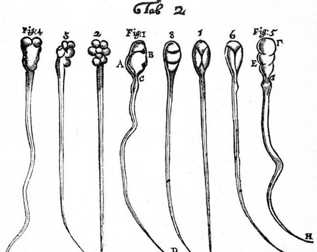 Phát hiện mới về cách hoạt động của tinh trùng, đánh đổ quan niệm sai lầm suốt 300 năm nay - Ảnh 2.
