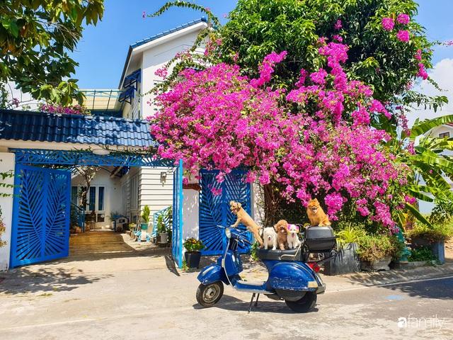 Khu vườn trước nhà xanh mát bóng cây và hoa của anh chàng Sài Gòn dành cả thanh xuân để chăm sóc thú cưng - Ảnh 2.