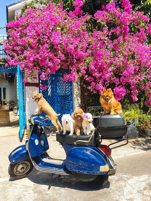 Khu vườn trước nhà xanh mát bóng cây và hoa của anh chàng Sài Gòn dành cả thanh xuân để chăm sóc thú cưng - Ảnh 11.