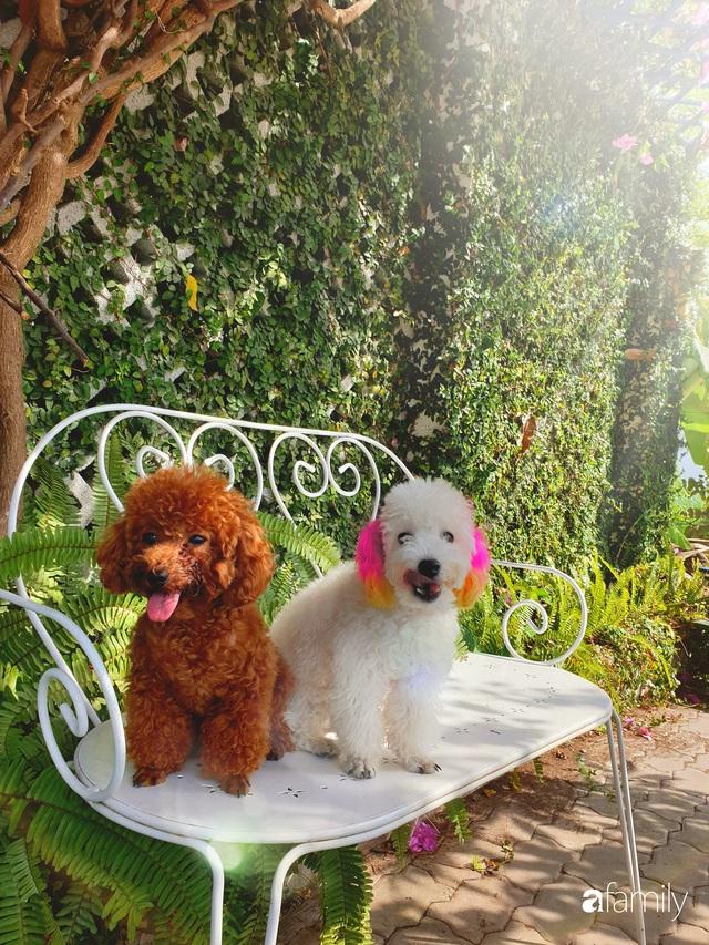 Khu vườn trước nhà xanh mát bóng cây và hoa của anh chàng Sài Gòn dành cả thanh xuân để chăm sóc thú cưng - Ảnh 13.