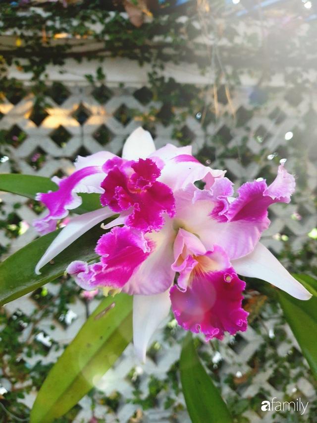 Khu vườn trước nhà xanh mát bóng cây và hoa của anh chàng Sài Gòn dành cả thanh xuân để chăm sóc thú cưng - Ảnh 15.