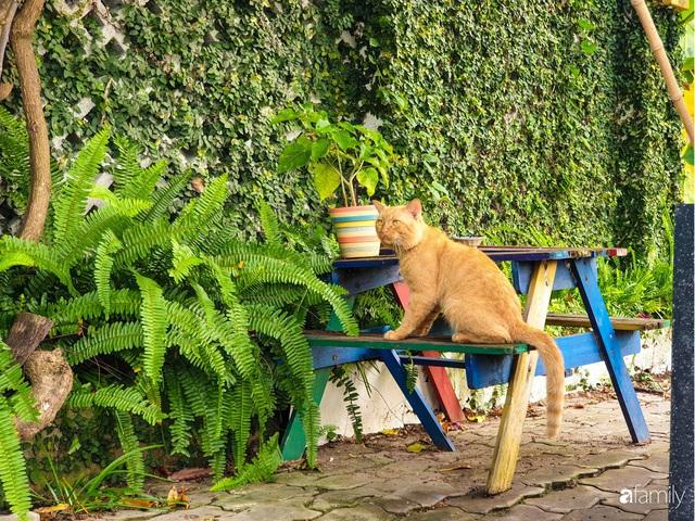 Khu vườn trước nhà xanh mát bóng cây và hoa của anh chàng Sài Gòn dành cả thanh xuân để chăm sóc thú cưng - Ảnh 16.