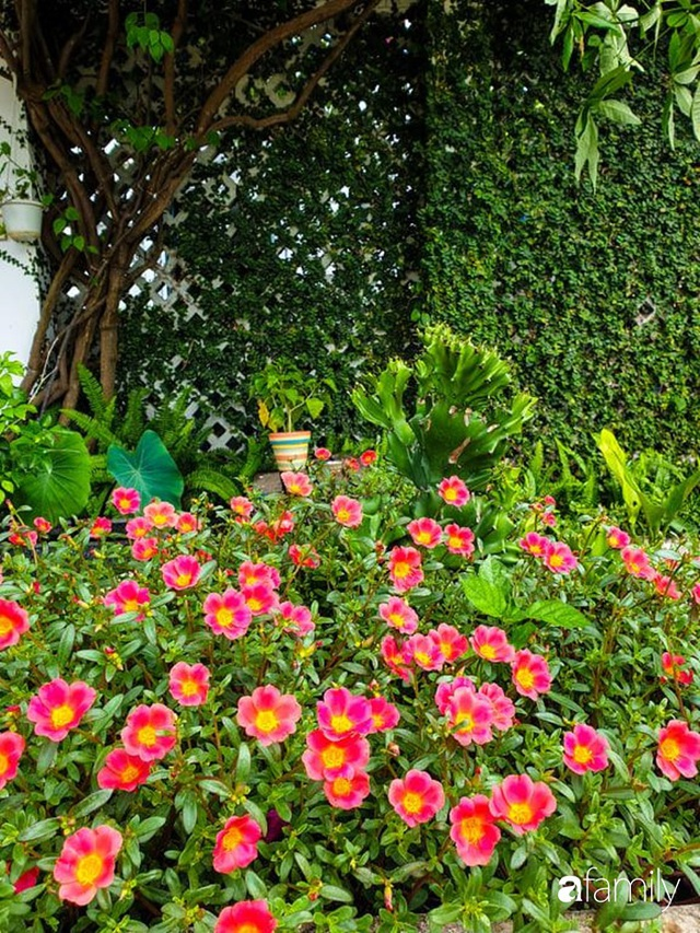 Khu vườn trước nhà xanh mát bóng cây và hoa của anh chàng Sài Gòn dành cả thanh xuân để chăm sóc thú cưng - Ảnh 17.