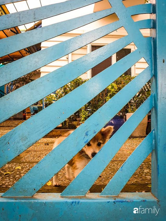 Khu vườn trước nhà xanh mát bóng cây và hoa của anh chàng Sài Gòn dành cả thanh xuân để chăm sóc thú cưng - Ảnh 20.