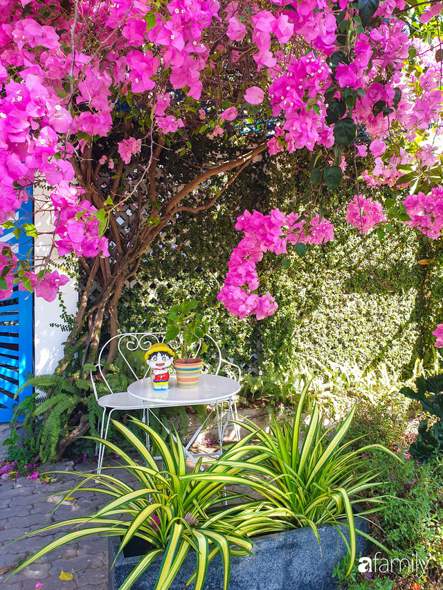 Khu vườn trước nhà xanh mát bóng cây và hoa của anh chàng Sài Gòn dành cả thanh xuân để chăm sóc thú cưng - Ảnh 3.