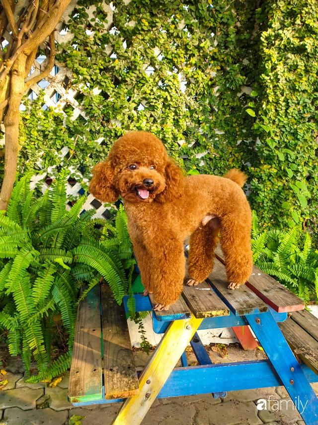 Khu vườn trước nhà xanh mát bóng cây và hoa của anh chàng Sài Gòn dành cả thanh xuân để chăm sóc thú cưng - Ảnh 24.