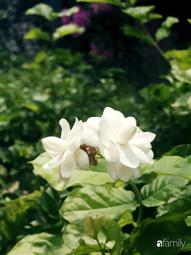 Khu vườn trước nhà xanh mát bóng cây và hoa của anh chàng Sài Gòn dành cả thanh xuân để chăm sóc thú cưng - Ảnh 6.