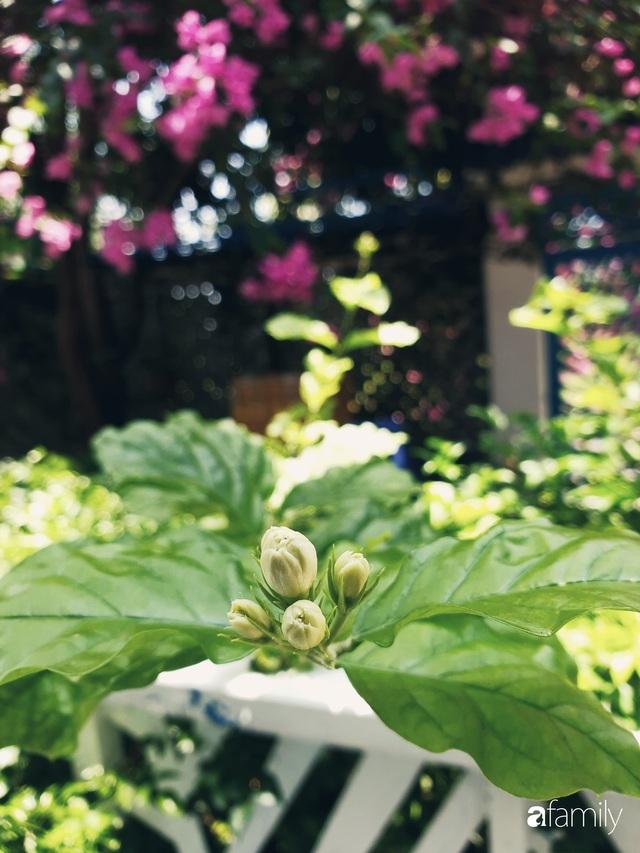 Khu vườn trước nhà xanh mát bóng cây và hoa của anh chàng Sài Gòn dành cả thanh xuân để chăm sóc thú cưng - Ảnh 8.