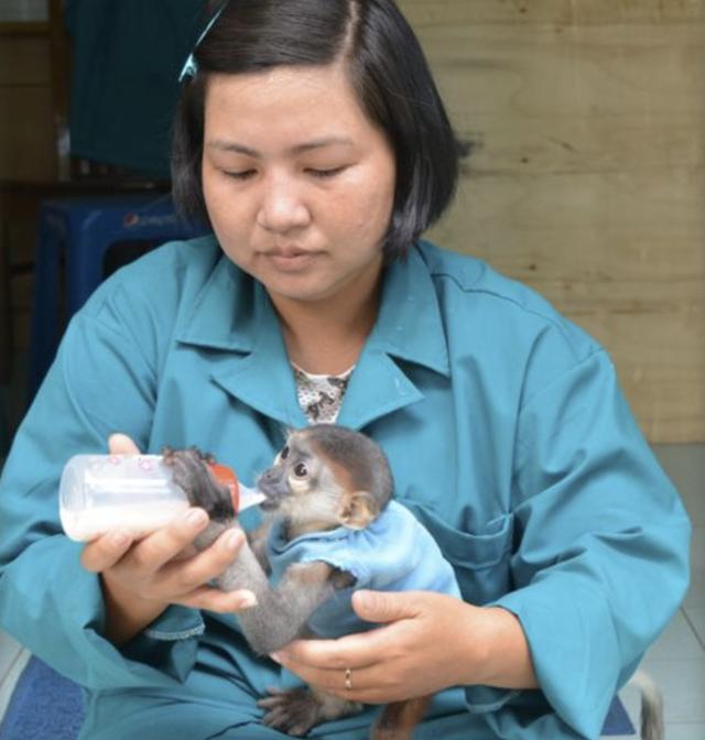 TP.HCM: Thảo Cầm Viên giảm 30% thu nhập của 300 nhân viên để lo cho 1.500 con vật, đóng cửa 2 tháng vì COVID-19 - Ảnh 1.