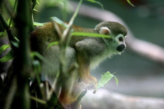 TP.HCM: Thảo Cầm Viên giảm 30% thu nhập của 300 nhân viên để lo cho 1.500 con vật, đóng cửa 2 tháng vì COVID-19 - Ảnh 2.