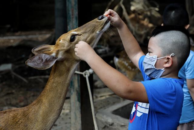 TP.HCM: Thảo Cầm Viên giảm 30% thu nhập của 300 nhân viên để lo cho 1.500 con vật, đóng cửa 2 tháng vì COVID-19 - Ảnh 4.
