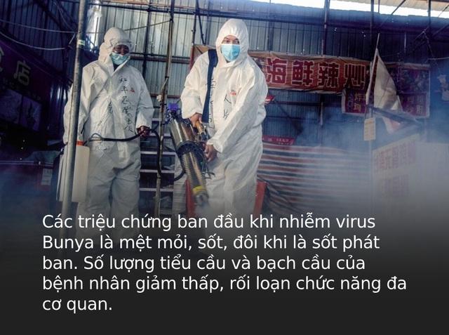 Virus Bunya bùng phát ở Trung Quốc: Đã xuất hiện từ 10 năm trước, gây chết người, lây bệnh qua máu và vết thương hở - Ảnh 3.