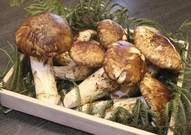 4 loại nấm đắt đỏ được săn lùng ở Việt Nam - Ảnh 2.