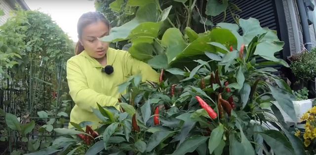 Vườn rau mùa thu của hot vlogger Quỳnh Trần JP - Ảnh 11.