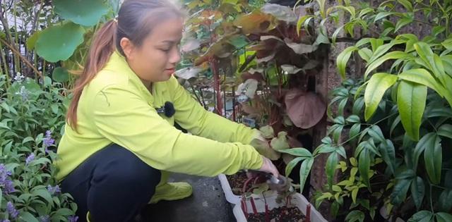 Vườn rau mùa thu của hot vlogger Quỳnh Trần JP - Ảnh 12.