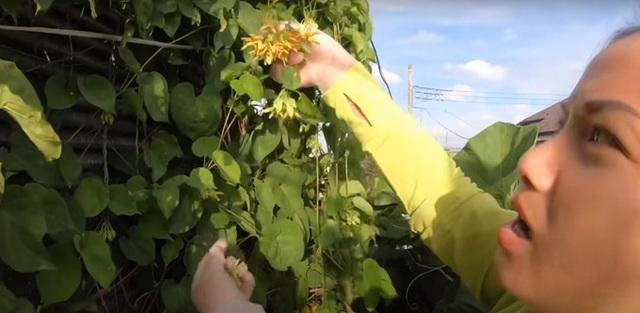 Vườn rau mùa thu của hot vlogger Quỳnh Trần JP - Ảnh 6.