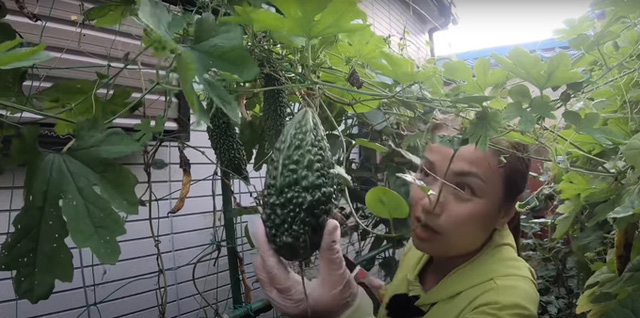 Vườn rau mùa thu của hot vlogger Quỳnh Trần JP - Ảnh 9.
