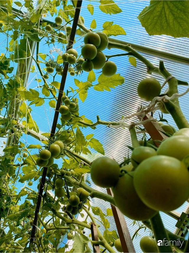 Khu vườn 200m² quanh năm xanh tươi với đủ loại rau quả sạch của mẹ Việt có thâm niên 7 năm làm vườn - Ảnh 12.