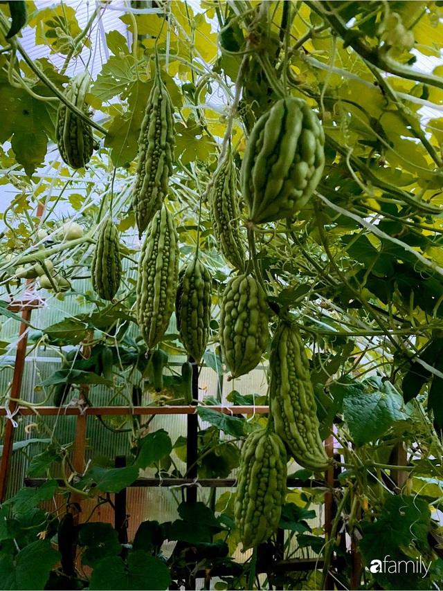 Khu vườn 200m² quanh năm xanh tươi với đủ loại rau quả sạch của mẹ Việt có thâm niên 7 năm làm vườn - Ảnh 5.