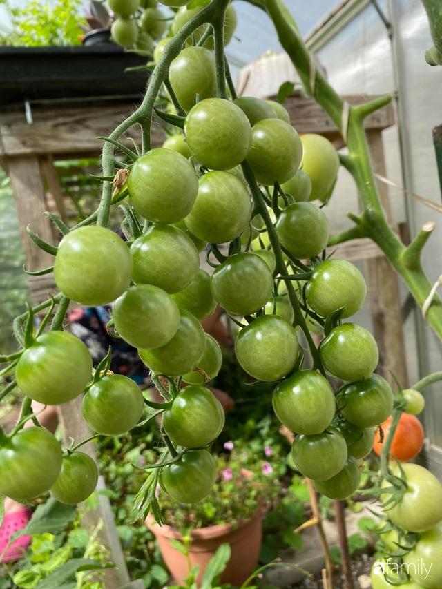 Khu vườn 200m² quanh năm xanh tươi với đủ loại rau quả sạch của mẹ Việt có thâm niên 7 năm làm vườn - Ảnh 10.