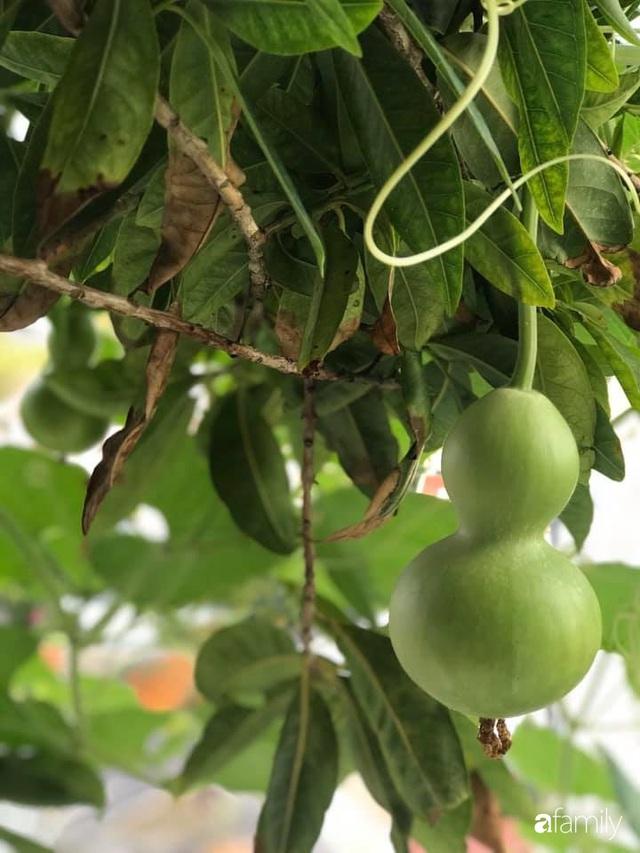 Ban công nhỏ ở chung cư phủ kín đủ loại rau quả sạch nhờ trồng bằng ống nhựa của mẹ đảm ở Sài Gòn - Ảnh 13.