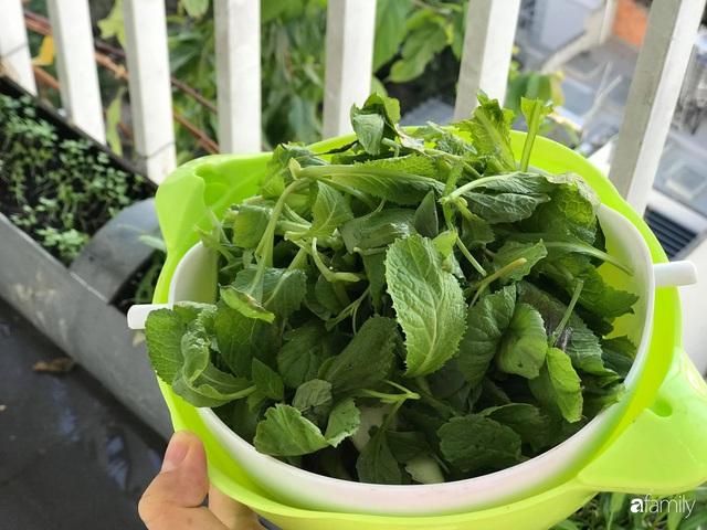 Ban công nhỏ ở chung cư phủ kín đủ loại rau quả sạch nhờ trồng bằng ống nhựa của mẹ đảm ở Sài Gòn - Ảnh 14.