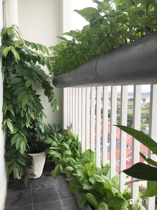 Ban công nhỏ ở chung cư phủ kín đủ loại rau quả sạch nhờ trồng bằng ống nhựa của mẹ đảm ở Sài Gòn - Ảnh 15.