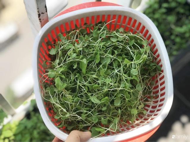 Ban công nhỏ ở chung cư phủ kín đủ loại rau quả sạch nhờ trồng bằng ống nhựa của mẹ đảm ở Sài Gòn - Ảnh 17.