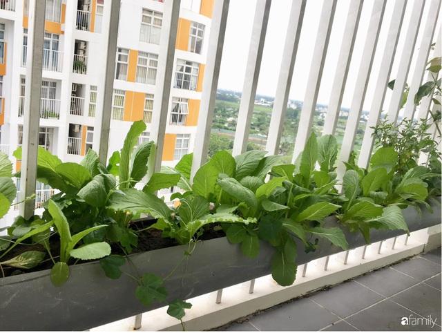 Ban công nhỏ ở chung cư phủ kín đủ loại rau quả sạch nhờ trồng bằng ống nhựa của mẹ đảm ở Sài Gòn - Ảnh 3.