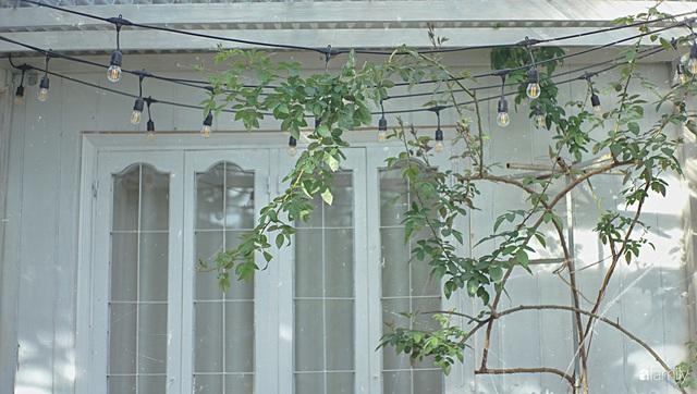 Ngôi nhà màu xanh an yên đẹp như cổ tích của vợ chồng trẻ bỏ việc lương cao ở Sài Gòn về Đà Lạt sinh sống - Ảnh 4.