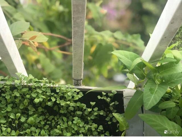 Ban công nhỏ ở chung cư phủ kín đủ loại rau quả sạch nhờ trồng bằng ống nhựa của mẹ đảm ở Sài Gòn - Ảnh 5.