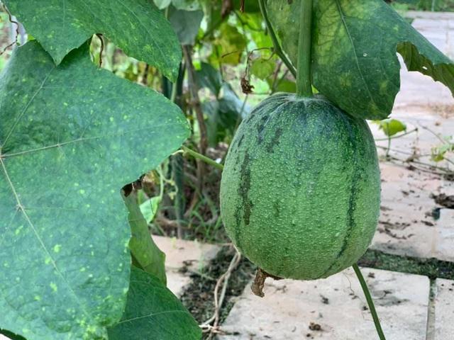 Có sở thích trồng cây, hoa hậu bí ẩn nhất Việt Nam sở hữu cả vườn rau quả sạch xanh mướt mắt khó ai bì kịp - Ảnh 4.